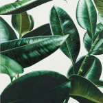 cover_plant